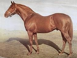 Baramul Stud - Star Kingdom
